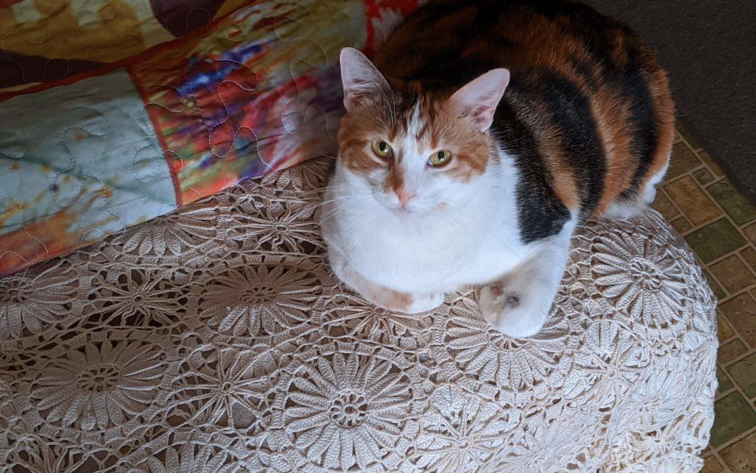 Our Cat Callie